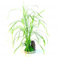 Sydeco Lily Grass (40cm)