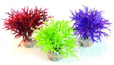 Sydeco Water Fern (25cm)