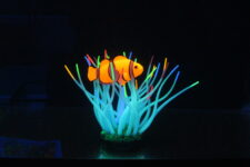 Aqua Lumo Sea Anemone with Clown Fish