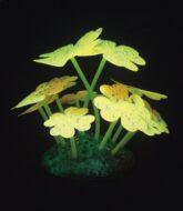 Aqua Lumo Yellow Clover Starry Plant