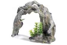 Driftwood Arch/Plant