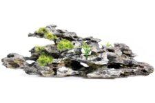 Driftwood / Plants
