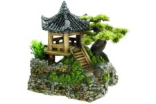 Pagoda House & Plants