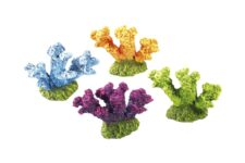 Coloured Coral