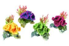 Coral / Plants