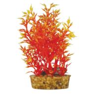 Egeria Orange