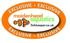 Maidenhead Exclusive General Logo Outline