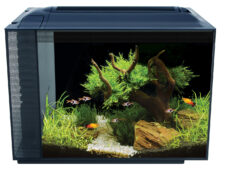 New Spec60 Aquarium