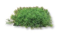 AquaManta Plant Grass Mat- Springer 25x25cm