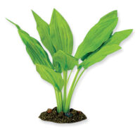 AquaManta Silk Plant-Amazon Broad Leaf 20cm