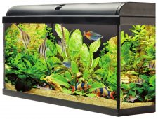 AquaTropic 100 Aquarium Set