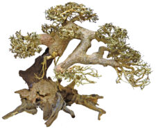 Superfish Bonsai Driftwood Tree - Large