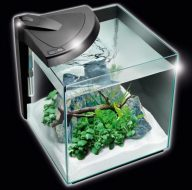 NEWA More 30 Aquarium