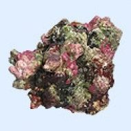 TMC 'Natureform' Replica Rock