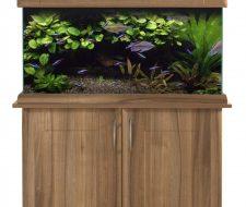 """SeaShell Aquarium's """"Summer Sizzler"""" Deals"""