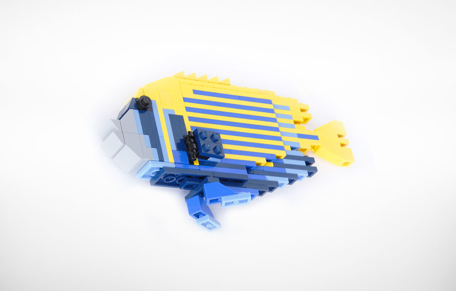 Smallemporerangelfish 1414163390