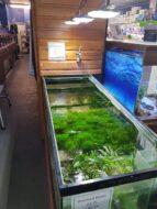 Ascot Store 8