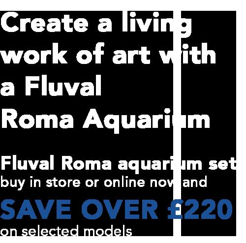 RomaText2.png#asset:113743