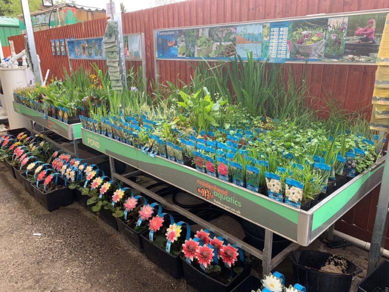 Plants Cwmbran