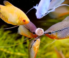Tropical Fish Feeding Guide