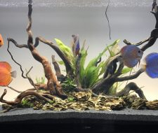 Congratulations to April 2017 Fishkeeper Gallery Winner!