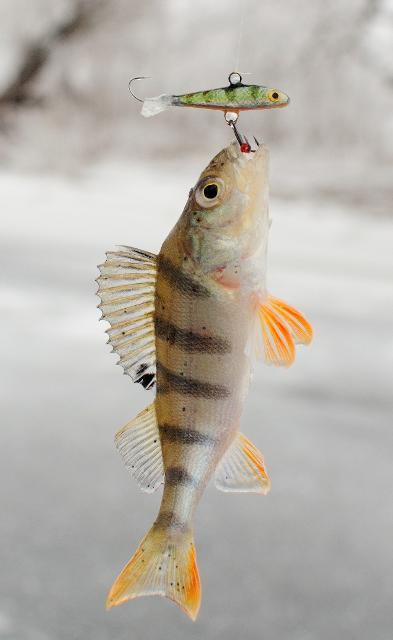 Рыболовный отчет Константин Кудинов С зимней блесной на Иргизе