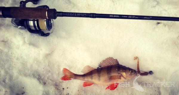 Отчет о рыбалке 12.02.2017