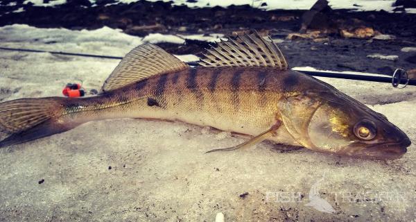Отчет о рыбалке 04.03.2017