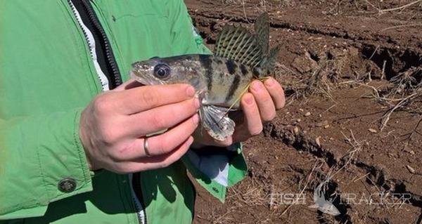 Крайняя рыбалочка перед рабочей неделей