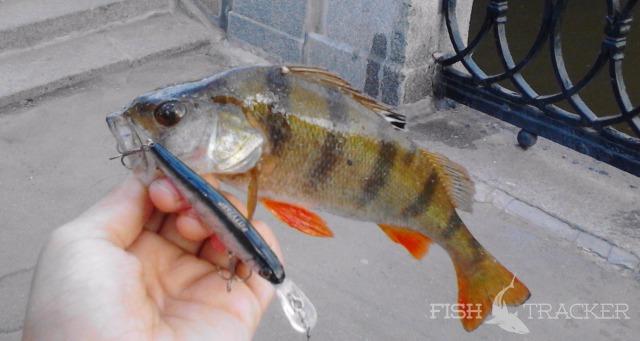 Отчет о рыбалке 03.06.2016 Городская рыбалка