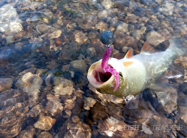 рыбалка на апреле держи реке в области мутной воде