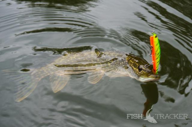 как клюет рыба в полнолуние