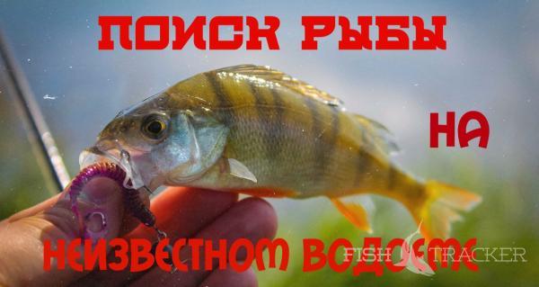Поиск рыбы на неизвестном водоеме. Ловля окуня.