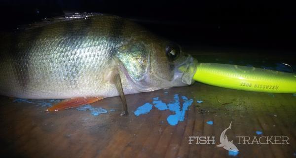 Отчет о рыбалке 15.11.2016