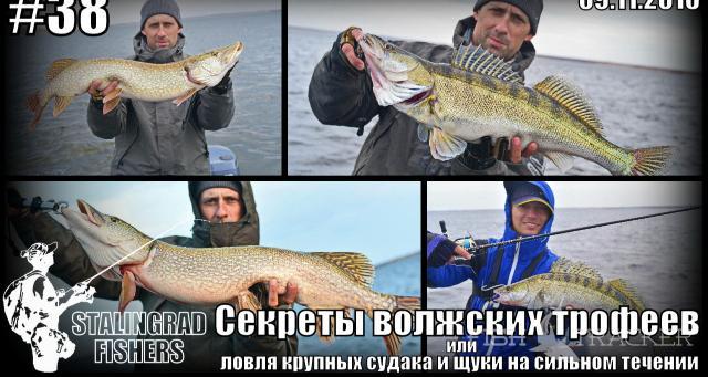 Секреты волжских трофеев или ловля крупных судака и щуки на сильном течении