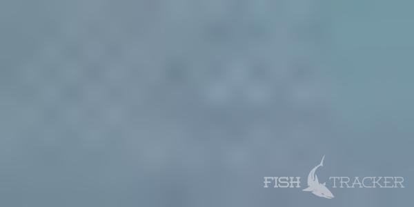 Отчет о рыбалке 19.07.2017