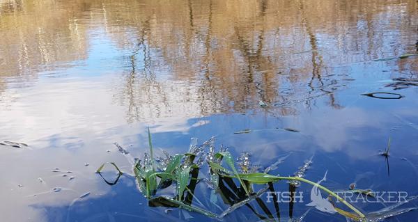Отчет о рыбаSPINNING IS MY PASSION  часть V «Гости из Тулы»лке 14.11.2017