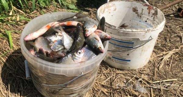 Отчет о рыбалке 04.08.2020