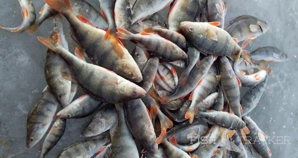 Отчет о рыбалке 18.02.2021