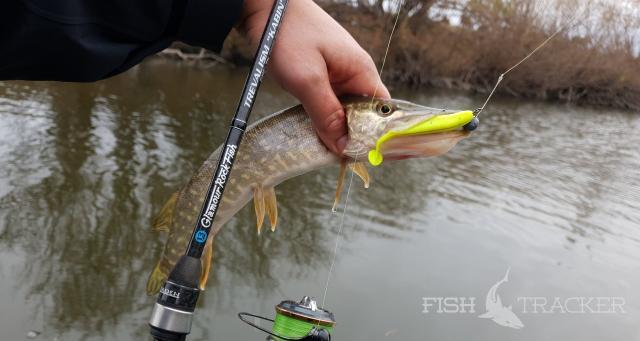 Очередная удачная рыбалка