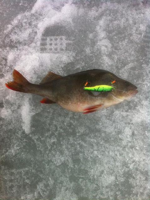 Рыболовный отчет FishTracker  Небольшой отчет