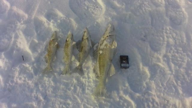 Рыболовный отчет Иван Разепин Совсем не плохо!!!