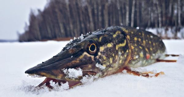 Зимняя  рыбалка как она есть!