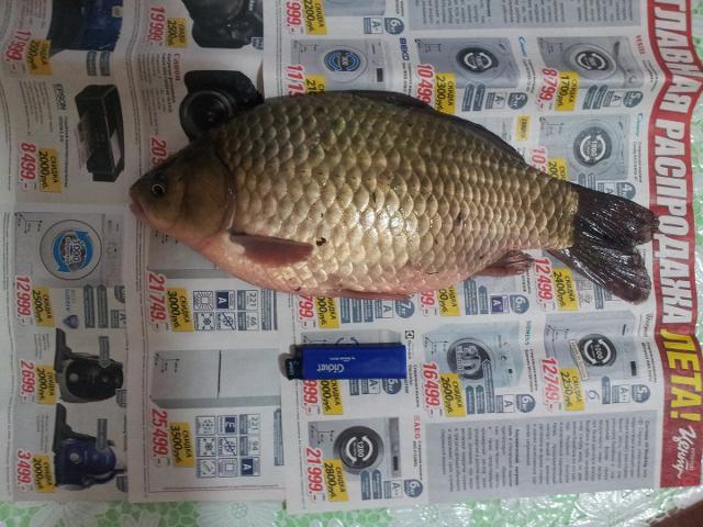 Рыболовный отчет Вячеслав  Последняя надежда карася