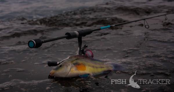 Отчет о рыбалке 22.12.2017