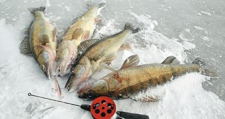 Рыбалка на судака!