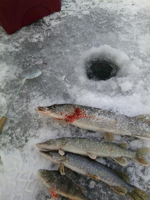 Рыболовный отчет Алексей  Смирнов Мой первый выход на лед!