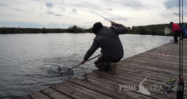 Одна рыба