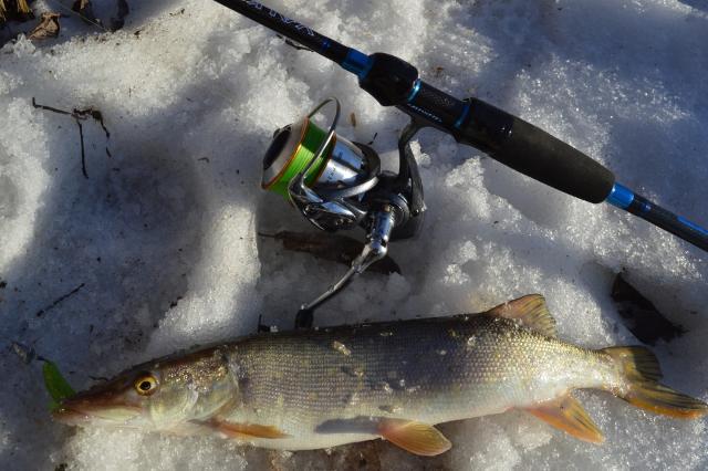 Рыболовный отчет Сергей Гоман Щучка просыпается