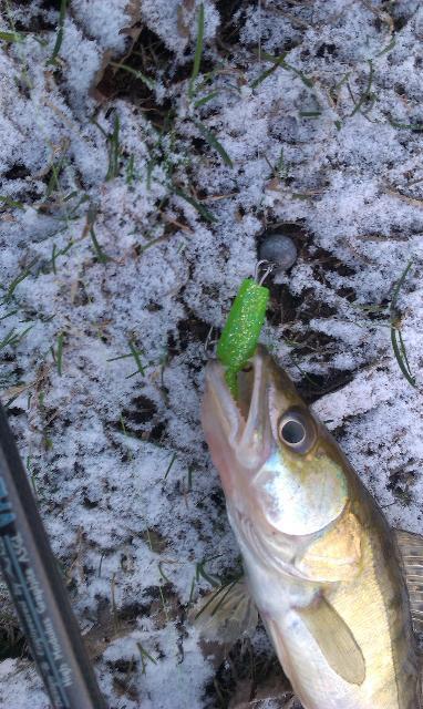 Рыболовный отчет Сергей Гоман Что мне снег, что мне зной...